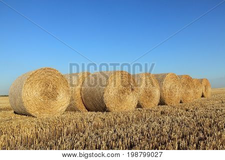 Wheat field after harvest bale of rolled straw with clear sky