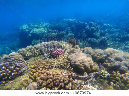 Beautiful undersea landscape with coral reef. Oceanic biosphere. Tropical fishes in wild nature. Clear blue shallow sea water wildlife. Sea bottom with coral ecosystem. Tropic adventure snorkeling