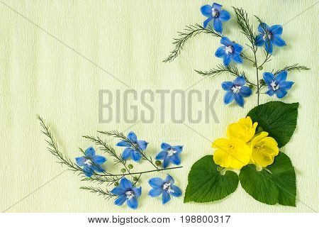 Festive flower arrangement. Frame made of delphinium flowers and evening primrose on yellow textured background. Top view flat lay