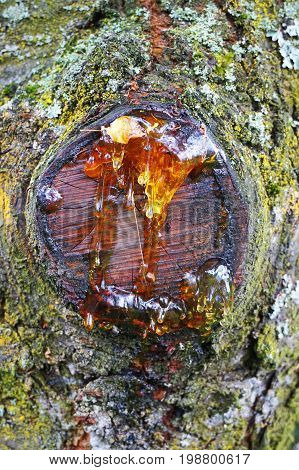 Resin On The Tree