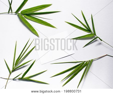Zen flat lay with green leaf and blank postcard. Green bamboo leaf on white background. Bamboo decor. Spa or beauty banner template with place for text. Blank card with tropical leaves. Bamboo design