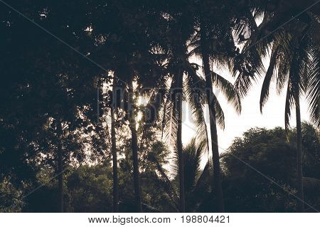 Palm tree garden silhouette on sunny sky. Palm tree toned photo. Palm leaf on sunset sky background. Tropical nature in sunset. Romantic sunset on exotic island. Exotic island sunset sky banner