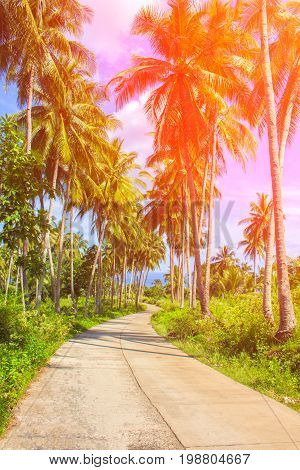 Orange toned coco palm trees alley. Tropical landscape with palms. Palm tree crown on blue sky. Sunny tropical island toned photo. Sunshine on palm leaf. Blooming tropical nature. Exotic island travel