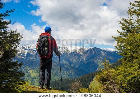 Traveler Stands On The Edge Of The Cliff Among Spruces