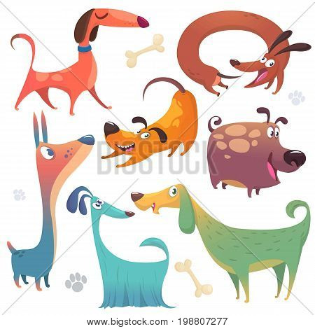 Cartoon dogs set. Vector illustrations of dogs icons. Retriever dachshund terrierpitbull spaniel bulldog basset hound afghan hound borzoi