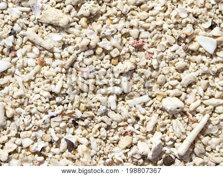 White coral texture. Seashells beach top view photo for background. Coral sand seaside under tropical sun. Sunny day by sea on exotic island concept image. White sand seashore texture banner template