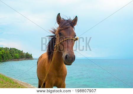 Horse and sea landscape. Travel photo. Brown horse head closeup. Lovely farm animal. Cute horse with blue seascape. Beautiful seashore view. Vacation adventure. Horse riding on beach banner template