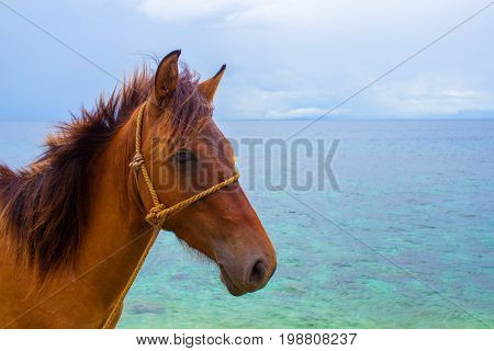Horse and sea summer vacation photo. Brown horse head closeup. Lovely farm animal. Cute horse with blue seascape. Beautiful seashore view. Vacation adventure horseriding on beach. Domestic farm animal