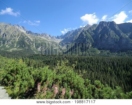 Panoramic view of the Tatra Mountains behind a pine forest, Slovakia
