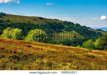 Forest On A Hillside In Evening Light