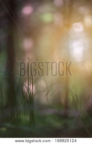 Grass in a dark forest against a backdrop of bright spots. Silhouettes haze and light create a mystical picture