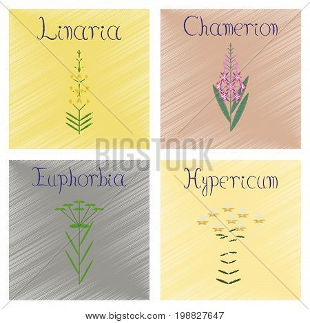assembly flat shading style Illustrations Chamerion Linaria Euphorbia Hypericum