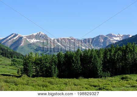 Colorado Rocky Mountain Pine Forest With Snow Capped Peaks