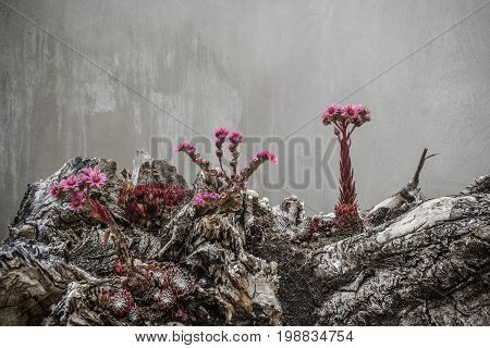 Surreal flowers in violet colors looking alien and from outher space growing on mystical rocks