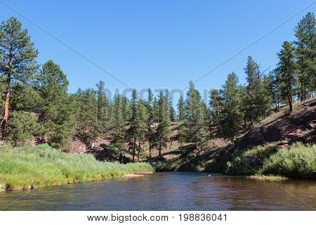 Mountain Stream Flowing Through A Pine Forest