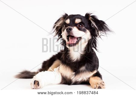 Cute little six month mixed breed dog on white background at studio