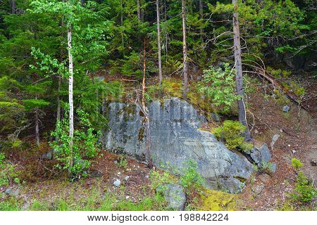 A boulder and forest in Montana's Glacier National Park.