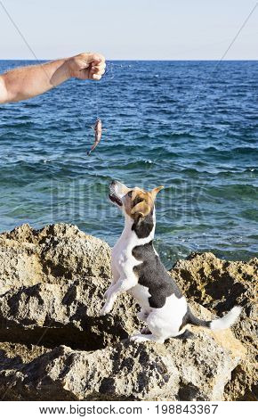 The fisherman's hand with a catch and athe hunting dog jack russell terrier