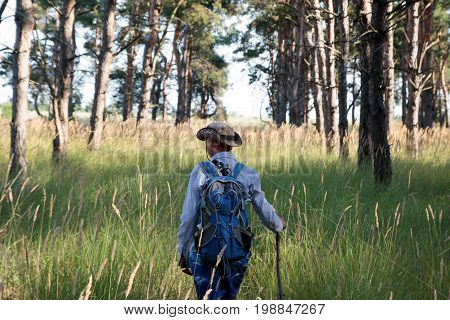 Adolescent In Hat With Backpack And Stick Walks In The Pine Forest. Summer Time.