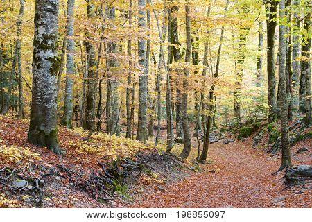 Hiking trail in Ordesa National Park, Pyrenees, Huesca, Aragon, Spain.