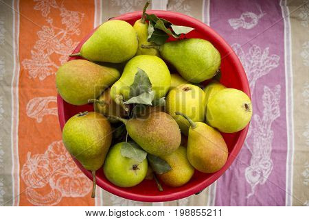 Bright ripe pears in a bucket on a thematic background