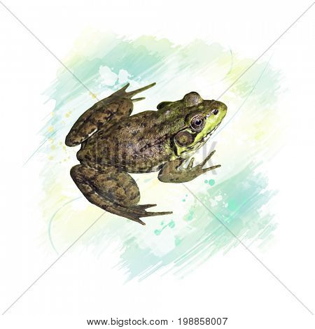 Digital Painting of Common water frog