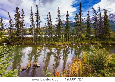 Lush clouds are reflected in the smooth water. Concept of active and ecological tourism. Shallow-water lakes, picturesque firs and mountains. The valley along the Pocahontas road
