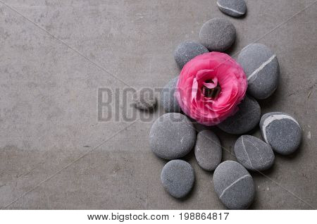 ranunculus and pile of gray stone on gray background