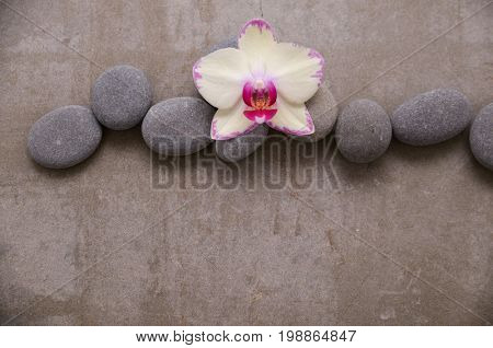 Three pink ranunculus flower and stone on gray background