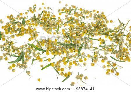 Sagebrush on white background