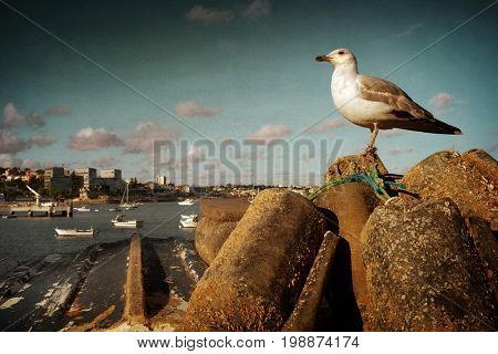 One seagull posing in sunny Cascais town landscape