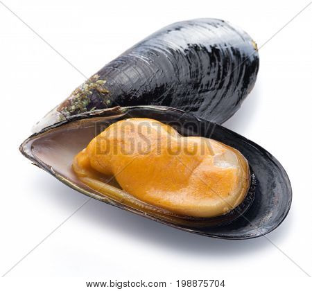 Boiled mussel on a white background.