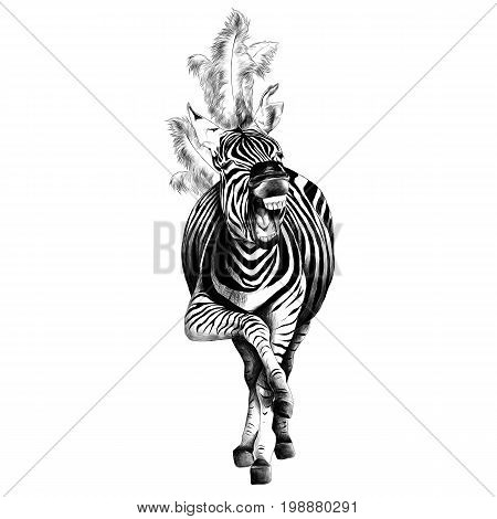 Zebra full height smiling with feathers on his head acts in the circus sketch vector graphics black and white drawing