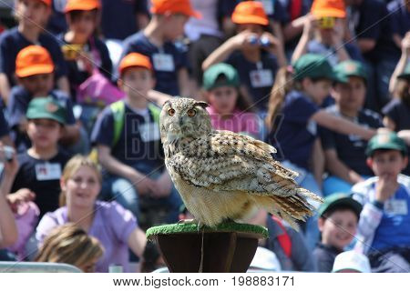 TORVAIANICA ITALY - MAY 27 2010: Eurasian eagle owl (Bubo Bubo) impressing his audience during a public show.