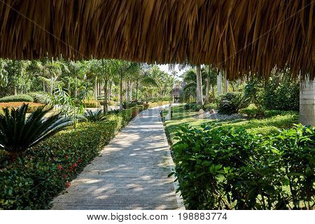 Palm trees and tropical vegetation as seen from under a coconut palm thatched roof. The path shows an interplay of shadows and sun with plam trees in the distance bathed in full sunlight.