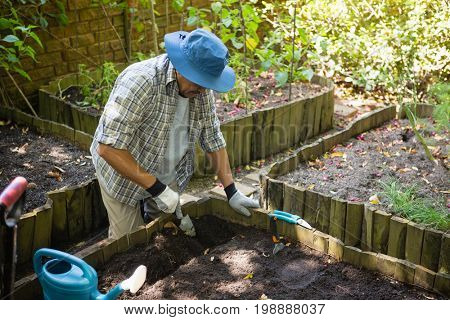 Senior man planting young plant into the soil in garden