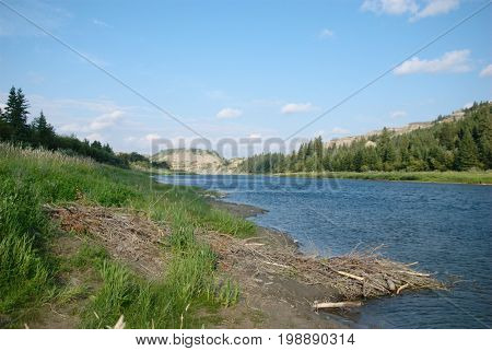 A small beaver lodge on the bank of the Red Deer River at Dry Island Buffalo Jump Provincial Park in Alberta, Canada.