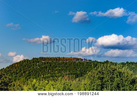 Mountain with green and red trees. Blue sky with clouds.