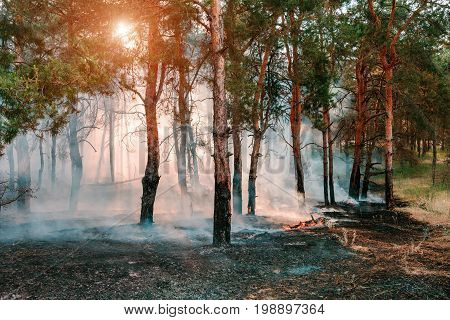Smoke from a fire in the forest