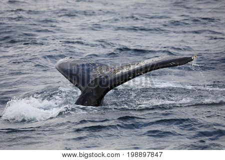photo of a humpback whale in sydney
