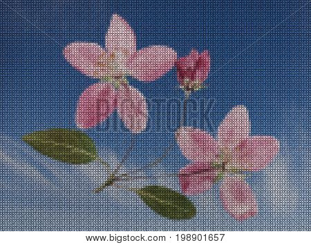 Illustrations. Cross-stitch. Branch flowers of apple-tree against blue sky.