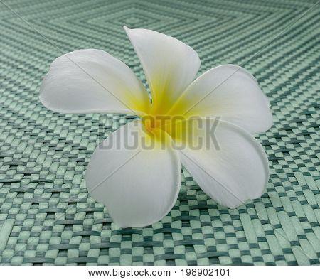 White frangipani flower on mat. Frangipani aroma tropical.