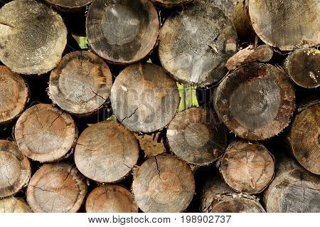 a pile of natural wooden logs background