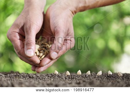 hands sowing seeds in the vegetable garden soil close up on green background