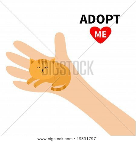 Adopt me. Hand arm holding orange red cat. Animal pet. Helping hands concept. Funny gift. Cute cartoon character. Close up body part. Flat design style. White background. Isolated. Vector illustration