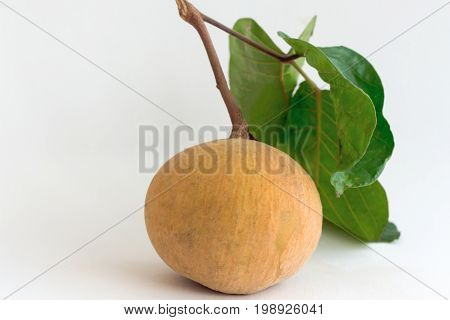 Santol with limb and leaf on white background. Santol is one of delicious Thai fruit so sweet and sour. Fresh santol with isolate background and copy space.