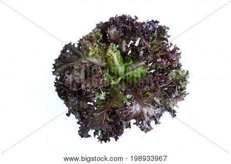 Red Leaf Lettuce Vegetable salad isolated on white background
