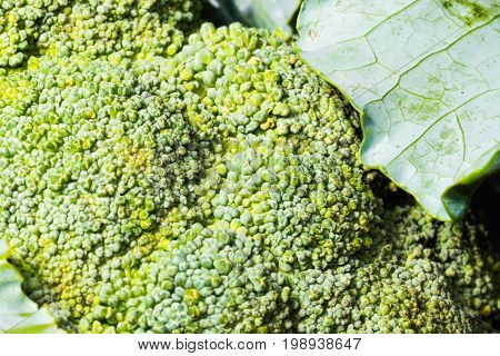 Closeup Shot Of Green Fresh Broccoli