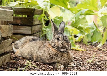 Adorable small brown and gray bunny rabbit relaxes in the garden