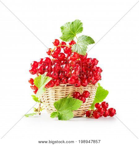 Fresh red currant berries in basket isolated on white background. Healthy eating. Single object with clipping path